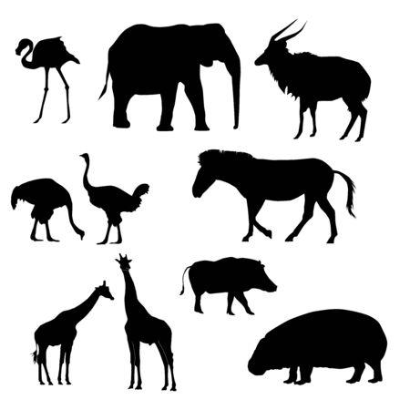 set of slhouettes of african animals (ostrich, giraffe, elephant, zebra, warthog, nyala, flamingo, pigmy hippo) vector isolated on white background