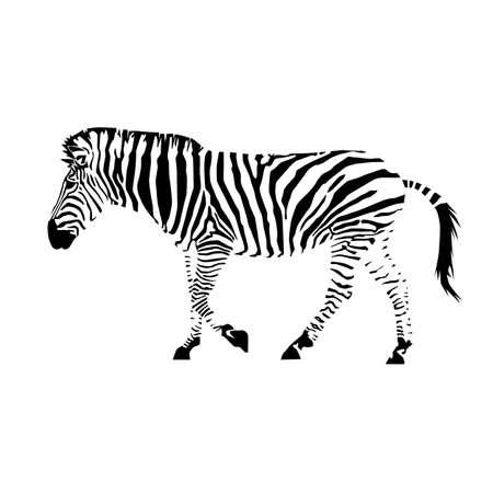 plains zebra with stripes (Equus quagga) from side silhouette Ilustración de vector