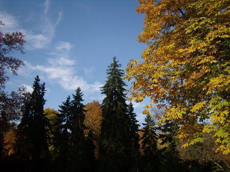 spectacle: spectacle of autumn Margit Island, Budapest
