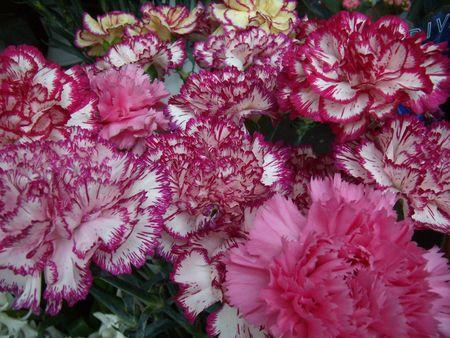 patterned: patterned carnations