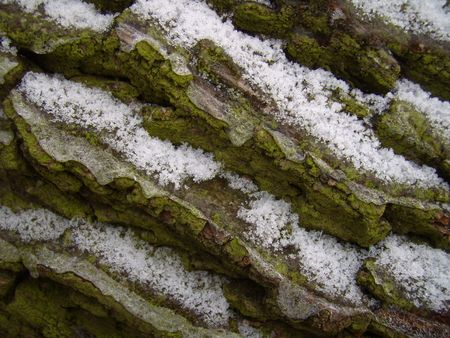 bole: snowy and mossy bole
