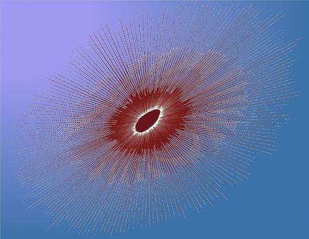 sea urchin: sea urchin, illustration