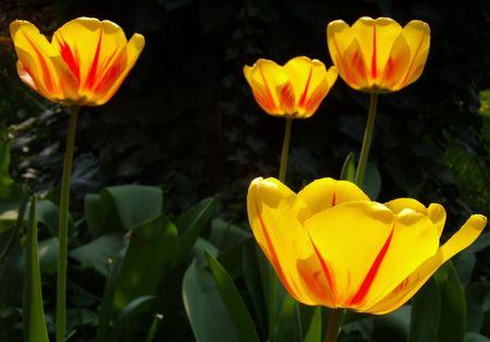 quietude: quietude of spring