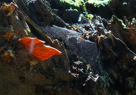 shinning: red letter and shinning cobweb in a deep forest Stock Photo