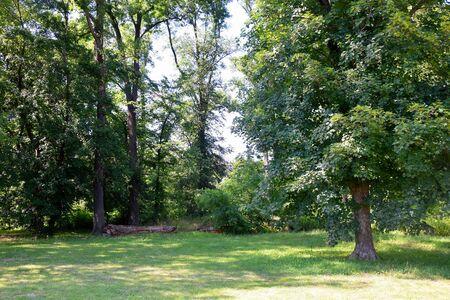 Peaceful Forest Scenery Background Czech Republic