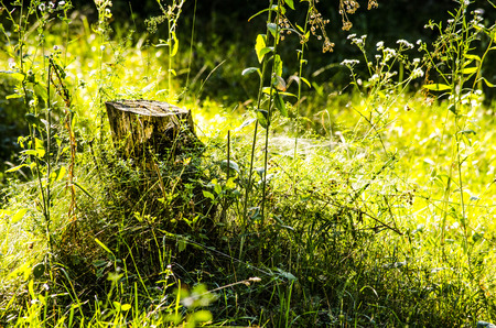 overgrown: The cut stump of the tree in an overgrown green grass field. Stock Photo