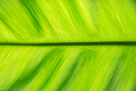 plentifully: Stem of life  green leaf  Stock Photo