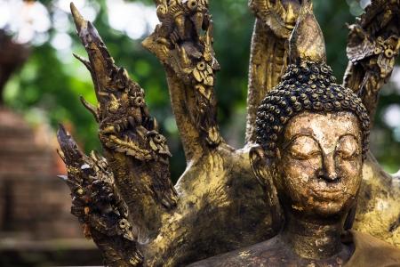 buddha image: Imagen de Buda con Naga