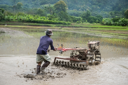 drudgery: Thai farmers working with a handheld motor plough in a rice field