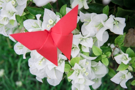 stick bug: butterfly Origami with flower