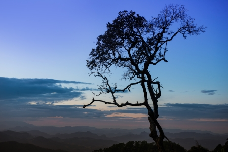 silhouette tree with twilight sky photo