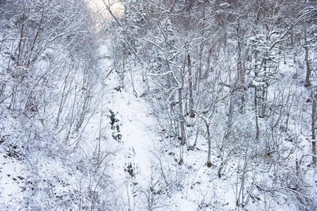 powder snow: powder snow mountain in Sapporo, Hokkaido Japan