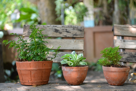 plant in pot: flower pots with plants and seedsplantinggardening