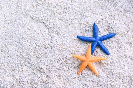 white sand beach: starfish in the beach sand
