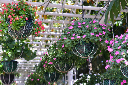 tidy Potted flowers hangging in the garden
