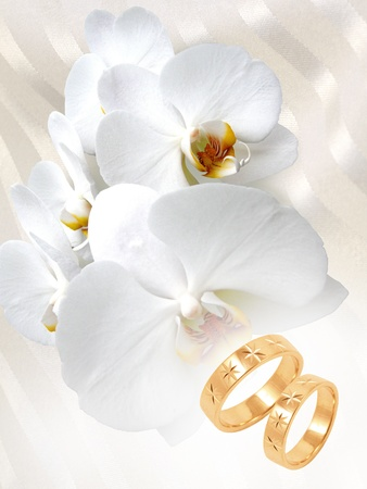 gold wedding rings with white orchid on white background photo