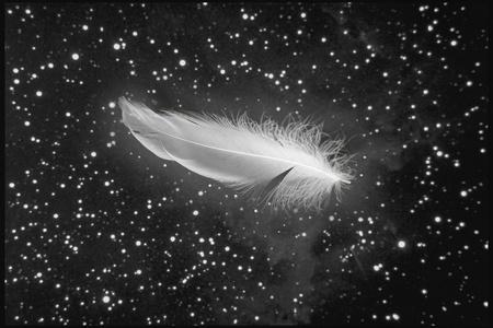 plume blanche: plume blanche tomber du ciel nocturne