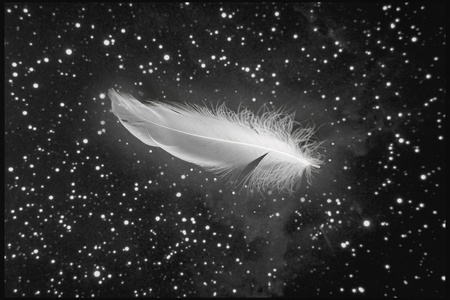 cleanness: white feather falling from night sky