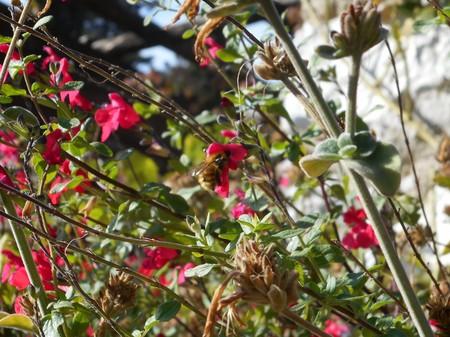 Pretty bee on beautiful pink flower. Stock Photo