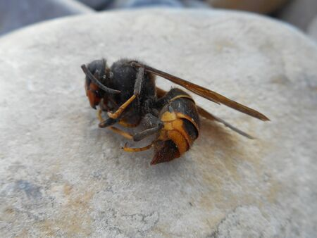 Wasp on pebble