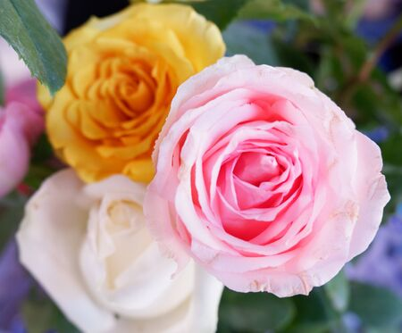 Fresh colored roses, pink, yellow, and white. Floral design, arrangement, flower production, or special occasion such as wedding, Valentines, Mother's Day, any seasonal or romantic concepts.  Foto de archivo