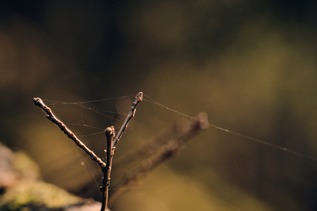 close up of small branches and cobwebs