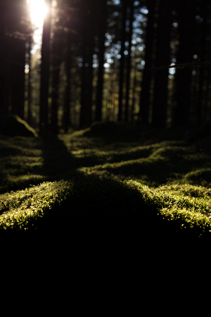 Nahaufnahme des Waldes