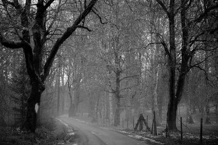 Schwarzweißfoto der Schotterstraße im nebligen Wald Standard-Bild