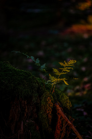 light strip hits a green plant in the forest