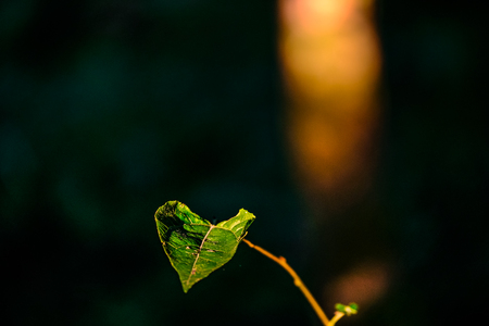 Close-up of a green leaf with green blurred background Фото со стока - 122722271
