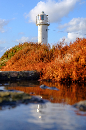 white lighthouse with reflections in a puddle orange bushes in The foreground