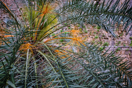 close-up of a green and orange palm with a wall in the background