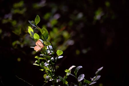 A brown little butterfly in sunlight sits on a green twig
