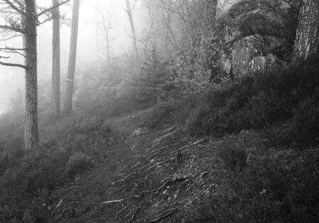 Black and white image of a foggy forest with pines and cliffs