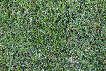 fescue: Straight Down View of Green Grass