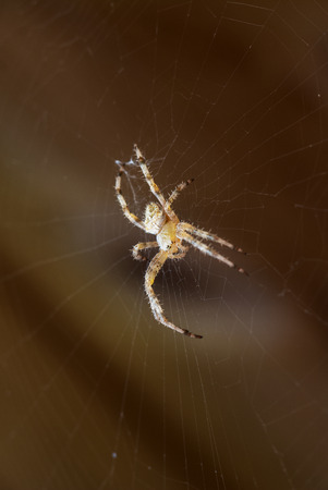 Beautiful spider and web on blur wooden background