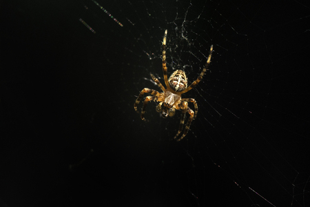 Beautiful spider and web on dark background