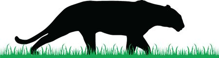 black panther walk through the green grass vector silhouette