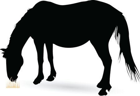 Silhouette of Large Horse Grazing vector illustration