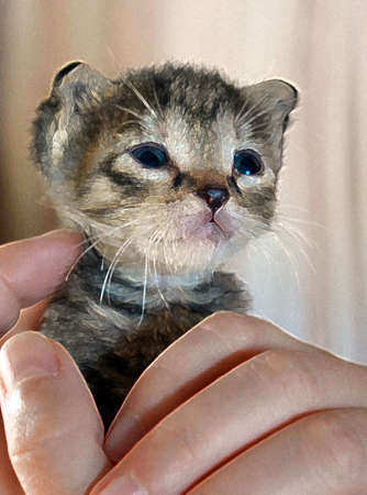 Kitten baby enjoy and caring at owners home