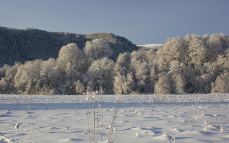 hoar: Hoar on a trees in winter cold morning Stock Photo