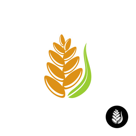 green wheat: Wheat ear icon with seeds and green leaf