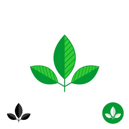 three leaves: Three leaves simple natural logo