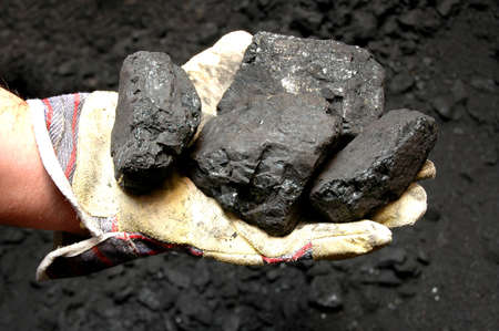 Black coal in miners hand