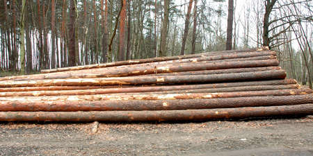 Stacked and cut logs for forestry Stock Photo - 7123397