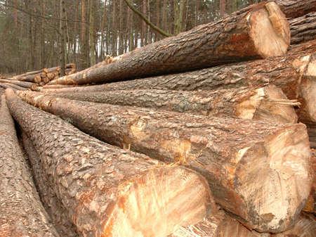 tree cutting: Timber in storage for later processing at a sawmill