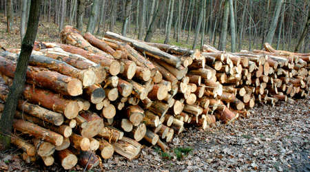 Stacked and cut logs for forestry photo