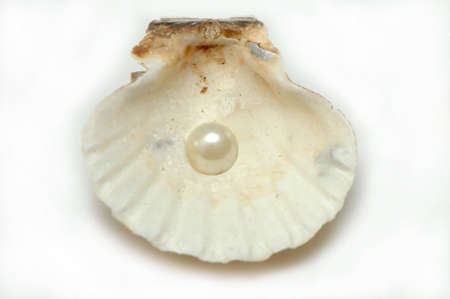 Shell with pearl on white background photo