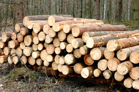 lumber mill: Piles of wood by a lumber mill Stock Photo