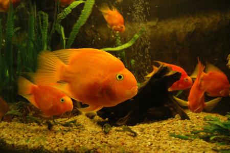 Fish in aquarium- sea life